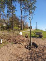 lia-baumpflanzung-100-todestag-max-klinger_foto-firma-kittel-2