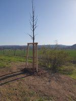 lia-baumpflanzung-100-todestag-max-klinger_foto-firma-kittel-6